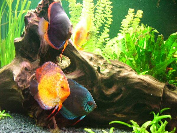 Nat rlicher zeolith im teich und aquarium for Aquarium im teich